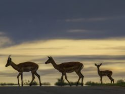 Two ways to see Africa's Big Five at Kruger National Park
