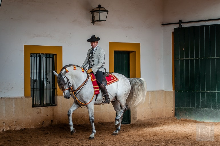 Culture and traditions at the Dancing Horses of Andalucia, in Jerez