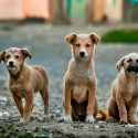 How to travel with your pet, why owning a dog doesn't have to stop you travelling