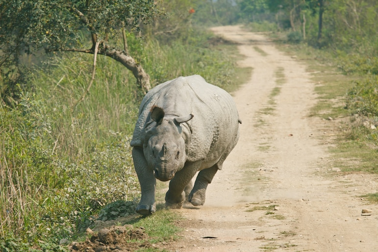 Rhino in the Kruger National Park, South Africa, one of Africa's big five