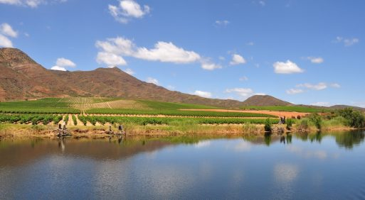 South African wine's best kept secret? The Robertson Wine Valley
