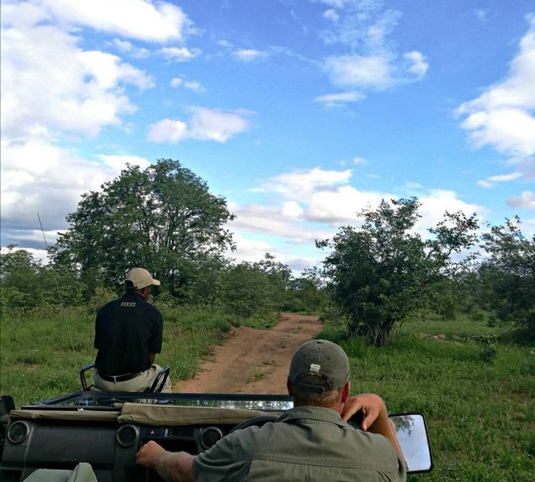 On safari looking for Africa's big five in Kruger National Park, South Africa