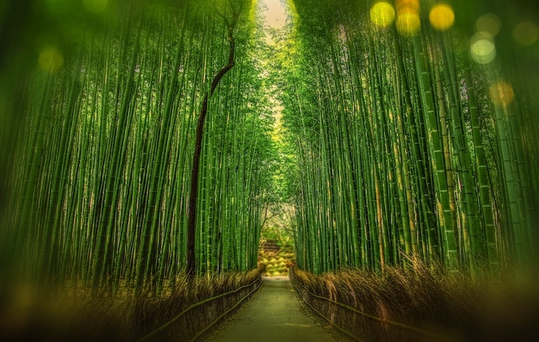 Things to do in Japan: Not your ordinary forest walk, explore Japan's bamboo forests