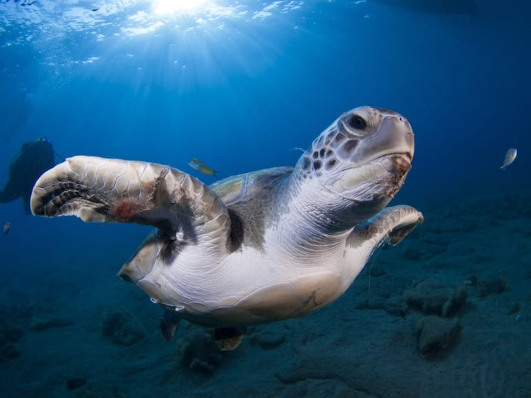 Unusual things to do in Tenerife - dive with sea turtles
