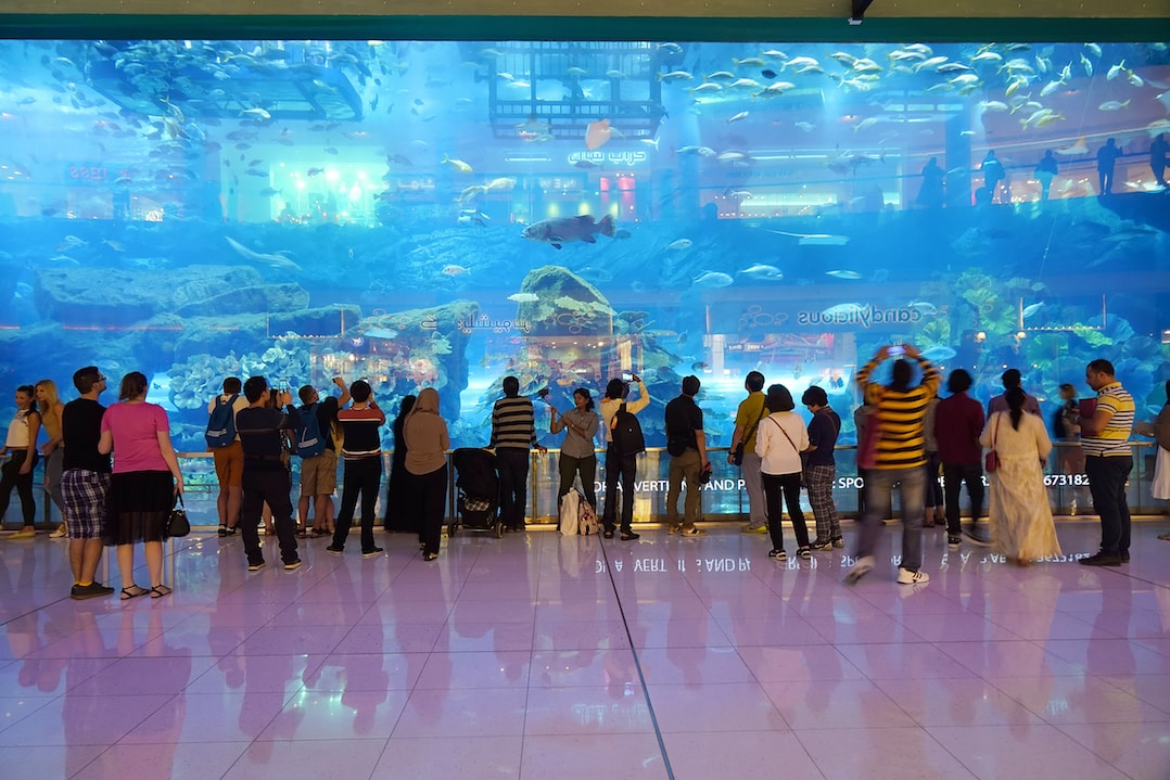 33,000 underwater creatures inhabit the Dubai Aquarium and Underwater Zoo copy