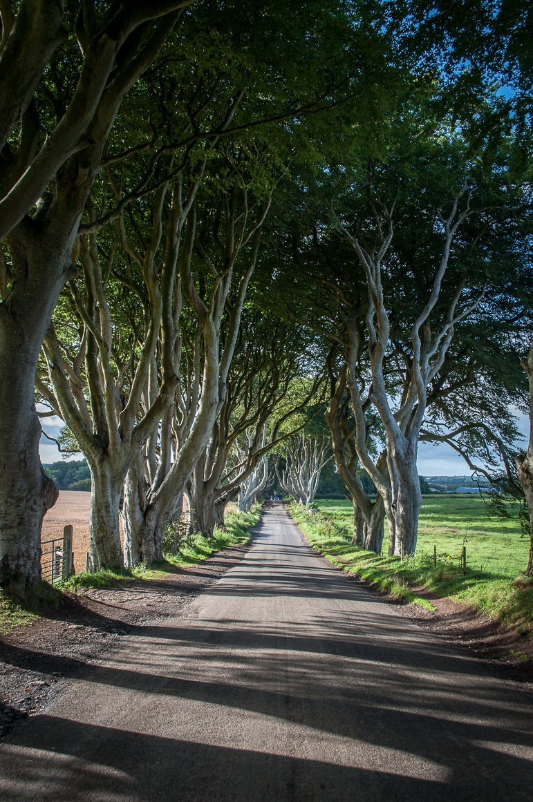Places to visit in Northern Ireland to discover Game of Thrones - the Dark Hedges is in the Causeway Coastal Route
