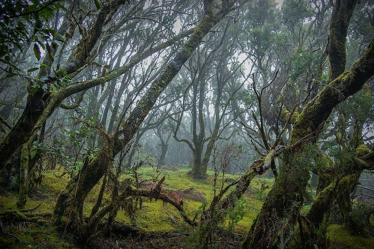 Things to do in the Canary Islands - the evocative laurel forests of Garajonay National Park in La Gomera | pic: Josevi11