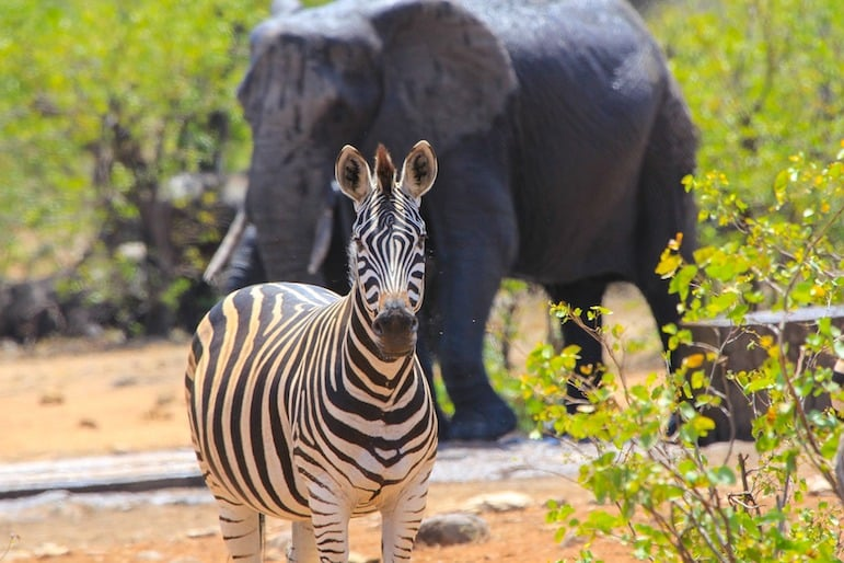 How to travel to South Africa: Watch zebra up close with a horseback safari experience in South Africa