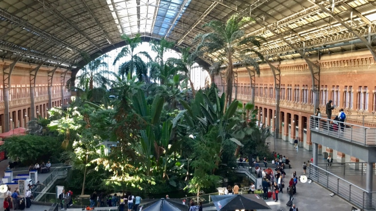 How to travel by train in Spain - don't miss the indoor garden at Madrid's Puerto de Atocha if you're travelling by AVE through the station