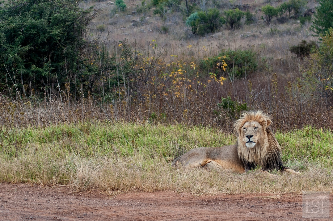 How to travel to South Africa: where to find luxury and how to explore safely