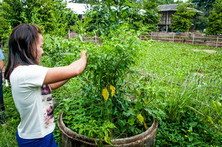 Picking herbs and produce for lunch at Wildflower Home, Chiang Mai