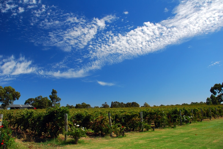 Enjoy a vineyard tour in Australia - home to some of the world's finest wine production