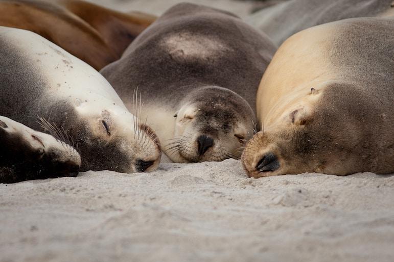 Enjoy close encounters with wildlife on Kangaroo Island
