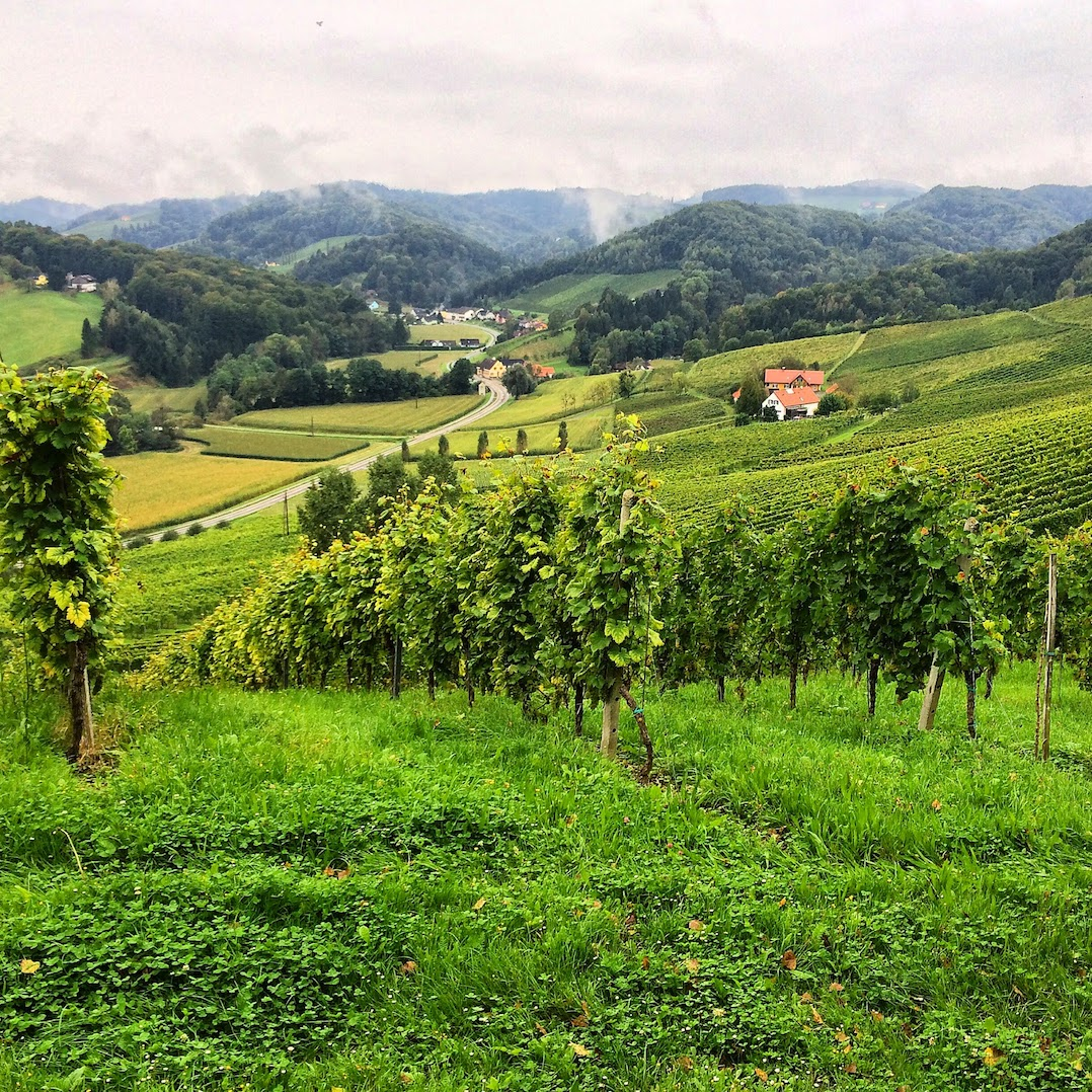 Things to do in Austria - visit the vineyards of Styria