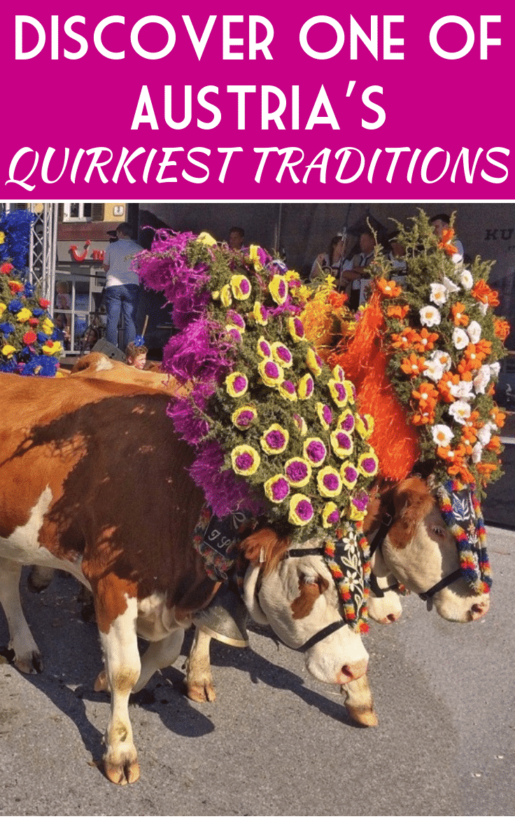 Cows-dressed-for-the-cattle-run-in-Kufstein-Tirol