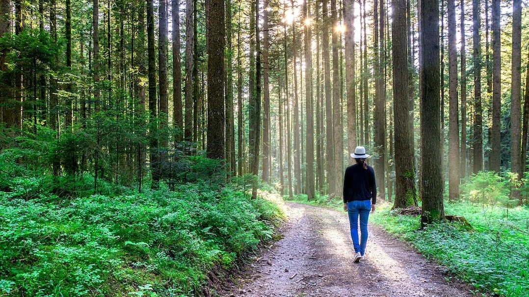 Get lost in the Black Forest - one of the best places to visit in Germany