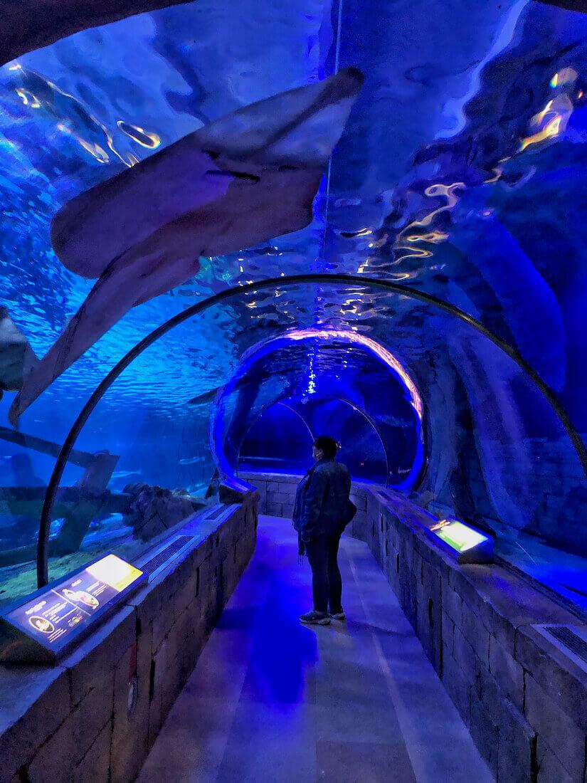 Sea Life Mall of America